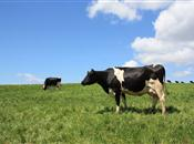 'Falling farm incomes today will jeopard...