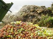 Sainsbury's pledges to slash food waste ...