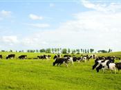 Dairy Stakeholder meeting focus on farmi...