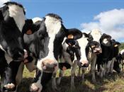 Organic dairy makes advancements in iodi...