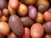 £150k potato storage fellowship cultivat...