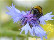 The importance of bees: helping raise fo...