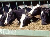 Farmers urged to reconsider feeding syst...