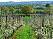 Tesco reports organic fruit demand incre...