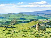 New opportunities for farming as more st...