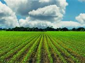 Managing soil disturbance and potential ...
