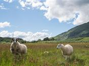 Union asks Crofting Commission to bring ...