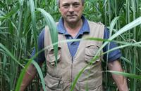 Norfolk farmer showcases miscanthus crop thriving on barren land