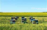NFU calls for recognition for the farming industry's efforts to protect bees