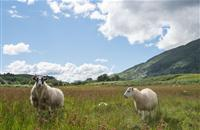 Union asks Crofting Commission to bring forward 'a simple guide for best practice'