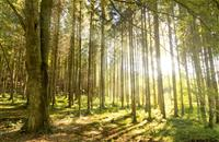 Government failing to deliver pledge to plant 11 million trees unless it takes radical action now