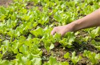Integrated Farm Management signals future for sustainable food and farming
