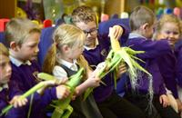 Norfolk Countryside Classroom day teaches children about the food they eat and the great outdoors