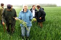 Innovative use of deep surface cultivations may give farmers effective non-chemical control for creeping thistle