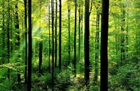 UN calls for better coordination between agriculture and forestry