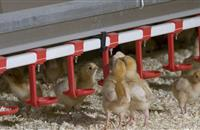 Lloyds Bank hatches new loan to mirror egg productivity cycle
