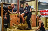 World record shear sets scene for the Olympics