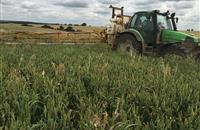 Experts suggest combating blackgrass via 'weed wiping'