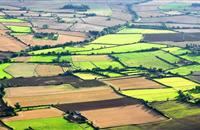 """Scotland-only management rules on harvesting and field margins put growers at a """"competitive disadvantage"""""""
