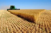 AHDB wheat yields close to 5-year average