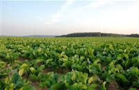 New contracts seek security for beet growers