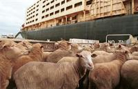 Day of action against long distance animal transport sees organisations unite