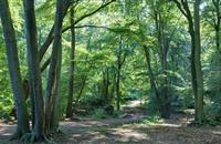 NI Agricultural Minister announces additional application date for Forest Expansion Scheme