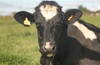 Turning milk into artisan ice cream: Dairy farmers look to diversifying produce to combat crisis