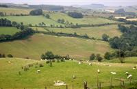 Rural Development Programme 'must speed up' to deliver 'real, tangible benefits' for Welsh farmers, NFU Cymru says