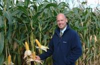 Attention to detail can add value to maize silage, says experts