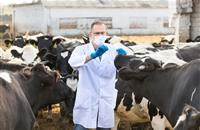 Safeguarding animal health and welfare 'at the heart' of veterinary Brexit priorities