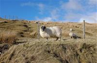 'Our business could be compromised due to continued failure': Upland farmers voice RPA concerns