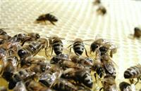 Bee disease 'American Foulbrood' detected in Aberdeenshire
