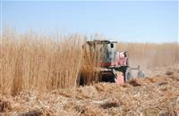 Farmers can diversity income and increase productivity by planting energy crops, says institute