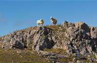 Farming union urges Sheep Forum to deliver 'real change' for sheep farmers