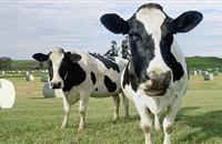 Farming Connect: Dairy cow behaviour for early disease detection