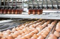 Supermarkets urged to clear up confusion on cage egg ban