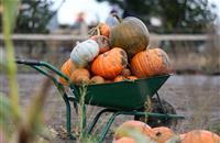 UK's largest pumpkin festival gets underway as farmers increasingly diversify