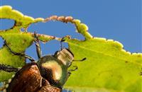 UK MEP's drive to protect farmland from plant disease clears final legislative hurdle
