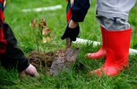 Irish charity scheme aims to see a million trees planted across country