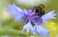 Pollinator-friendly projects around UK spring up as public urged to meet 'bees needs' this winter