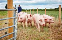 Yorkshire to be top place in Europe for pig research thanks to multi-million pound investment