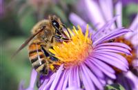 Scientists propose plans to prevent 'large-scale declines' in bee populations