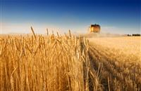 AHDB releases 2017/2018 Recommended Lists for cereal and oilseeds
