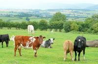 New industry-led scheme to help farmers avoid the effects of bovine TB