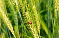 NFU stresses importance of increasing public awareness around use of crop protection products