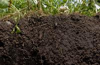 UN celebrates World Soil Day by emphasising role of pulses to boost sustainable agriculture