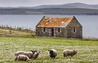 Nominations open for Scottish crofting elections