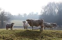 Bovine TB: 'Refreshed strategy needed to remove reservoir of infection in wildlife'