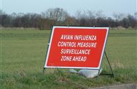 Government confirms bird flu in flock of turkeys at farm in East Lindsey, Lincolnshire